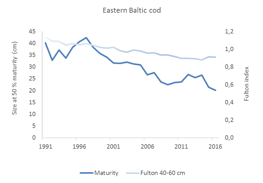 Figure 5.3.5. The condition of Eastern Baltic cod and the size at which it matures is decreasing.