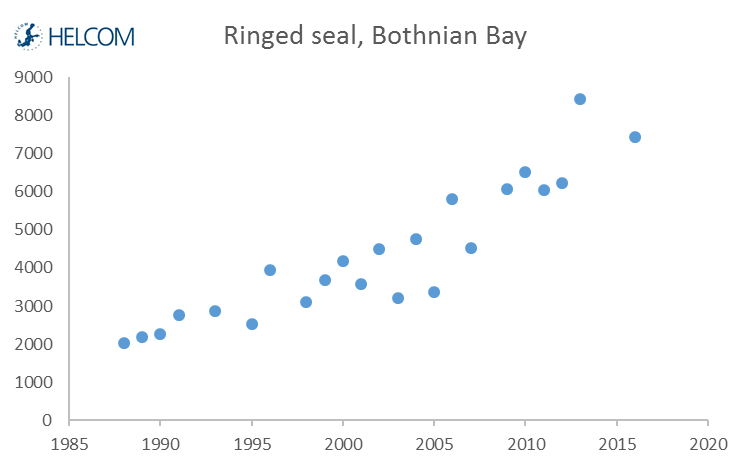 Figure 5.4.7. Developments over time in the counted number of ringed seals hauling out in moulting time in the Bothnian Bay since 1988.
