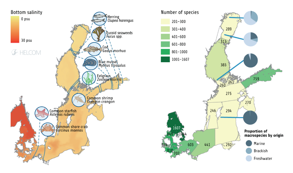 Figure 1.2. The Baltic Sea Is Characterised By Brackish Water, And By Gradually Decreasing Salinity From Its Entrance In The Southwest To The Inner Parts. These Conditions Also Affect The Distribution Of Species. The Left Figure Shows The Salinity In Different Areas Of The Baltic Sea And The Inner Distribution Limits Of Some Species Of Marine Origin (cod And Herring: According To Natural Resources Institute Finland (2017); Other Species: Furman Et Al. (2014) And Finnish Environment Institute (2017)). The Right Figure Shows The Total Number Of Macrospecies In The Sub-basins, Including Invertebrates, Fish, Mammals, Birds And Macrophytes (HELCOM 2012a). The Blue Pie Charts Illustrate How The Proportions Of Freshwater, Brackish And Marine Species Shift Along The Salinity Gradient, Based On The Number Of Macrospecies In Each Of These Categories At Different Locations (Furman Et Al. 2014).