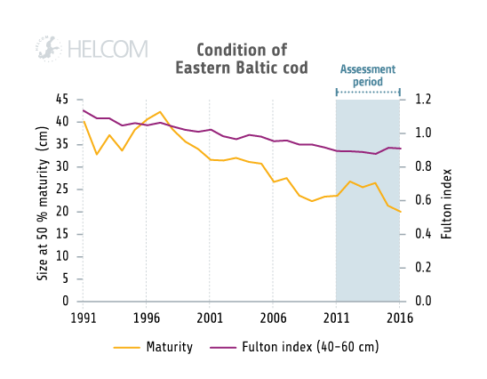 HELCOM HOLASII Fig 5.3.6 Size Structure And Condition Of Eastern Baltic Cod